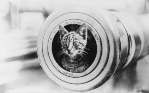 Cat in the cannon of the HMAS Encounter, WW1